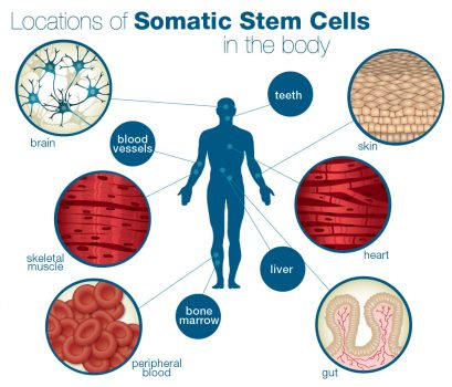 stem cells manusia